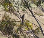 parrot-in-tree